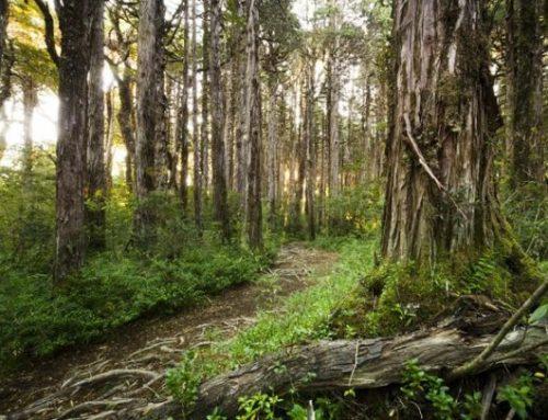 OLCA libera un instructivo para proteger bosque nativo ante arremetida de agroindustria